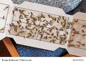 ungeziefer unser ratgeber gegen sch dlinge im haus. Black Bedroom Furniture Sets. Home Design Ideas